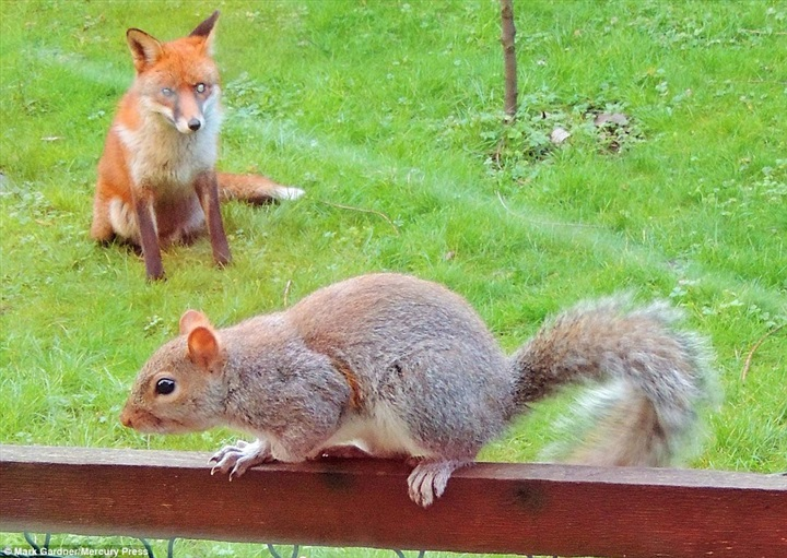Fox And Squirrel